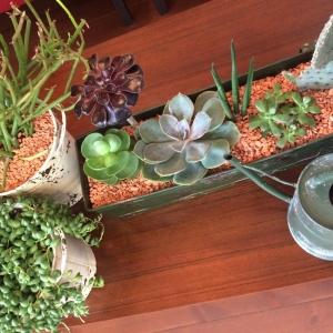 以前の記事: 新しい植物!!!