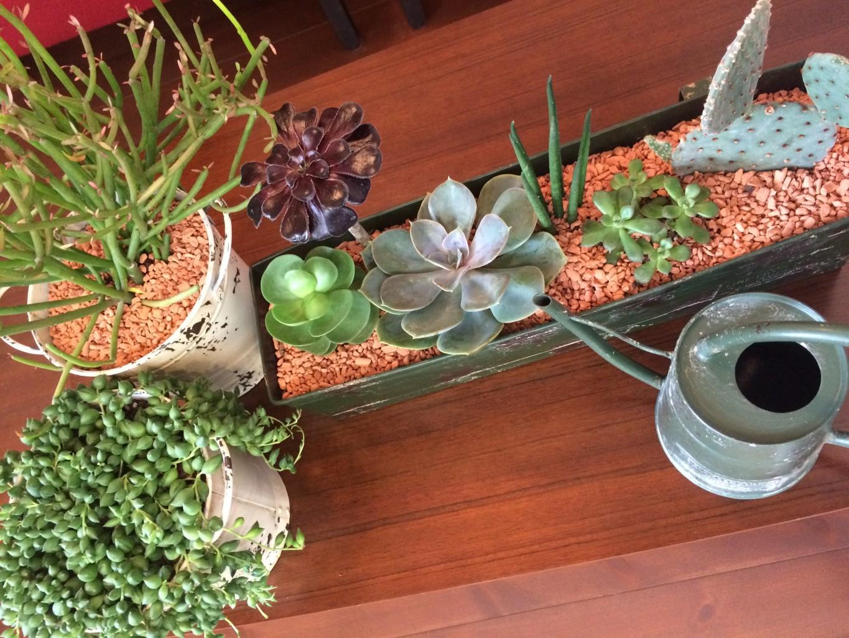 新しい植物!!!