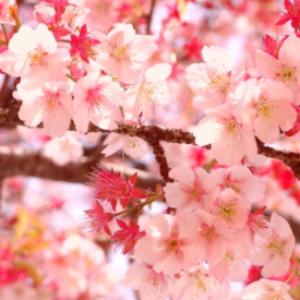 以前の記事: 休日のお花見?とお勉強会〜