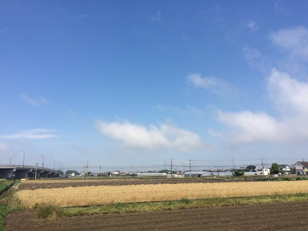 Roccaです麦も刈り取られ〜景色がシンプルに〜