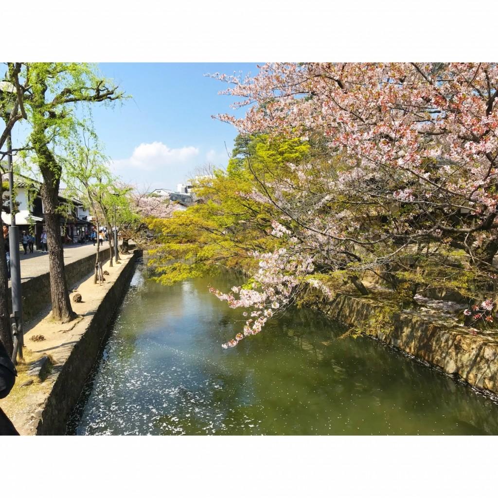 休日に春を満喫しに岡山まで〜行ってきました