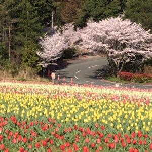 新しい記事: 春のドライブに◎